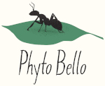 Phyto Bello | Sustainable Landscaping